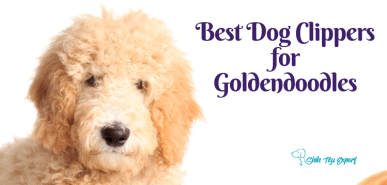 Best Dog Clippers for Goldendoodles