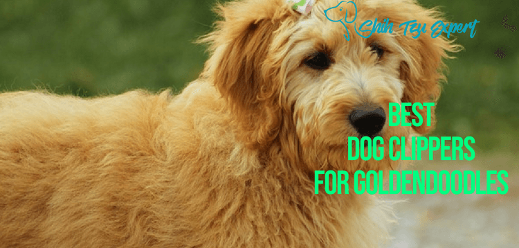 Top 5 Best Dog Clippers for Goldendoodles 2019