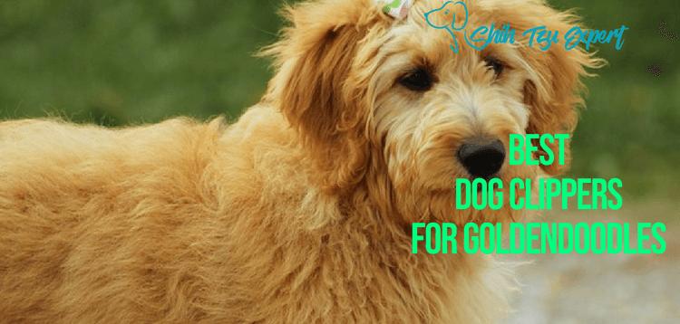 Best Dog Clippers for Goldendoodles