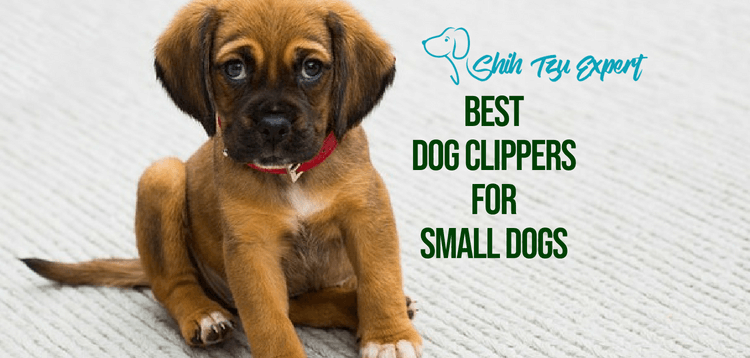 4 Best Dog Clippers for Small Dogs + 2019 For Worry Free Grooming :)