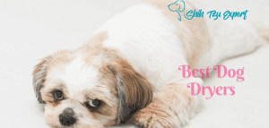 Best Dog Dryers : Things to think about before purchasing!