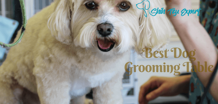 Best Dog Grooming Table : What to look for when buying one?