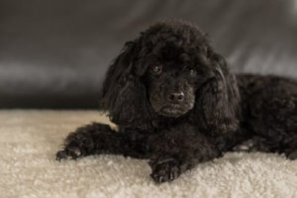 How can I make my dog more comfortable with grooming?