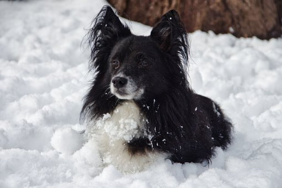 Immediate Emergency Care & How to warm a dog with hypothermia