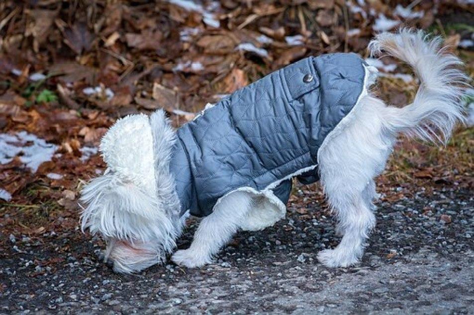Petcee Waterproof Fleece Lined Reflective Jacket: