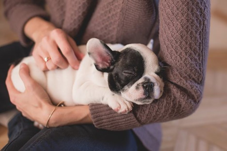 When To Use a Dog Thermometer