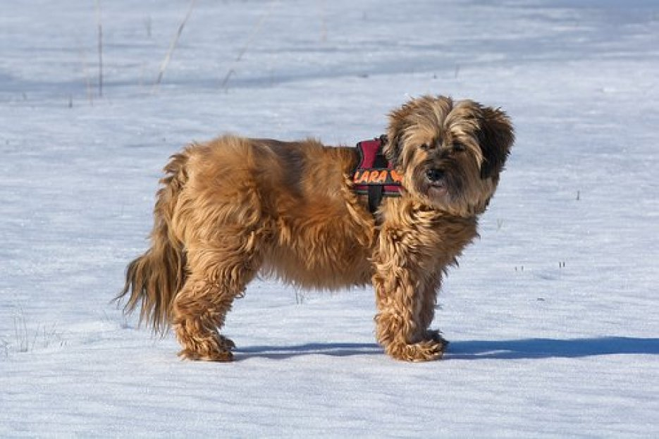How much is too Cold for Dogs in Winter?
