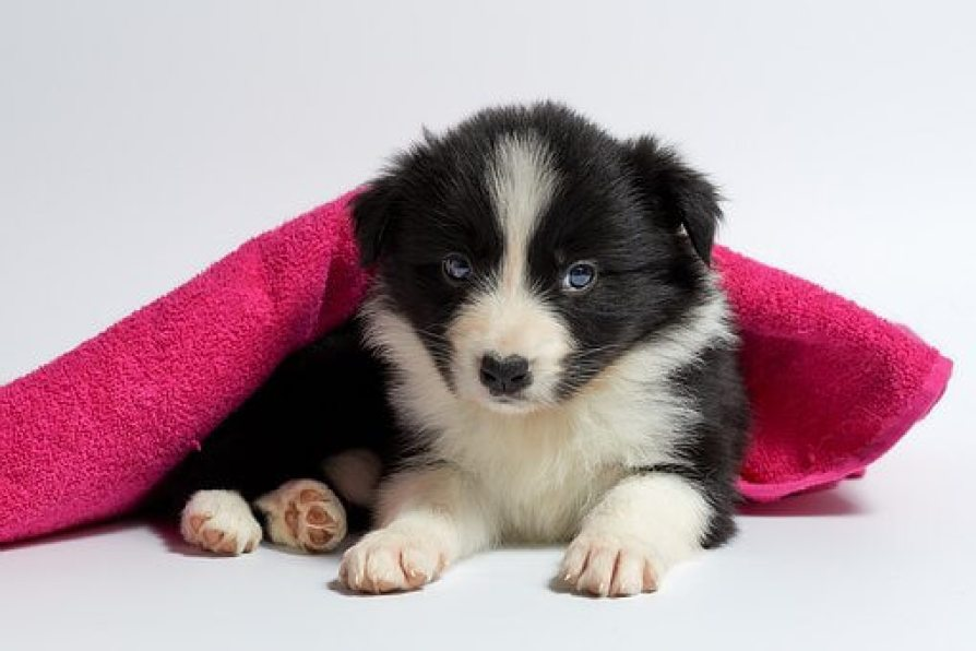 What to Look for When Buying a Crate for a Dog Suffering from Separation Anxiety?