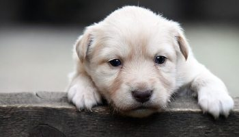 Separation Anxiety in Dogs : Here is a guide to help you