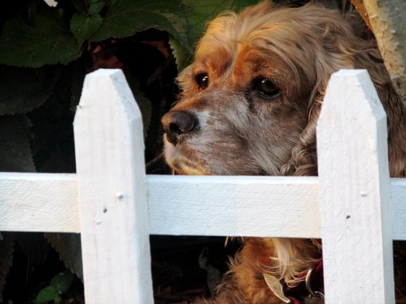 PetSafe In-Ground Fence - Or Should We Say Fences