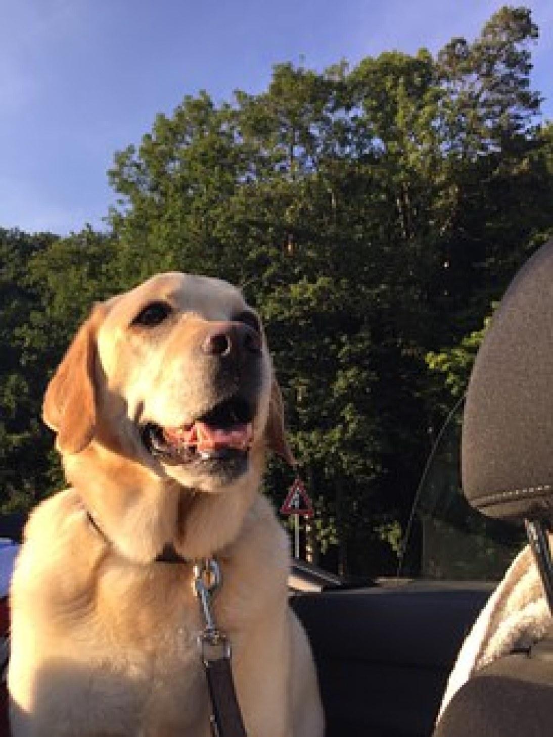 Leash Boss Dog Car Seat Belt