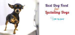 Best Dog Food for Lactating Dogs