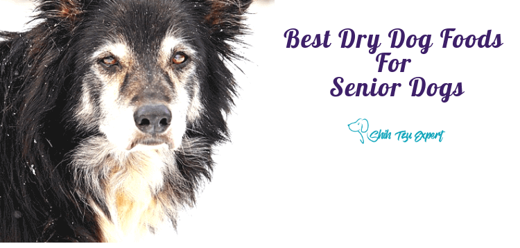 The Best Dry Dog Foods For Senior Dogs