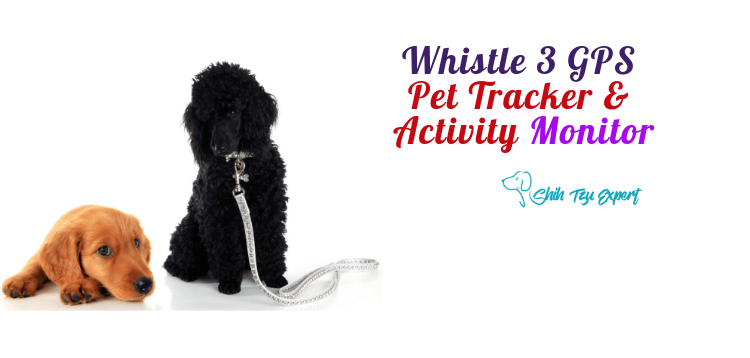 Whistle 3 _ GPS Pet Tracker & Activity Monitor