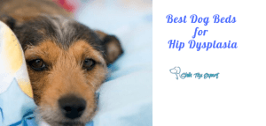 Best Dog Beds for Hip Dysplasia