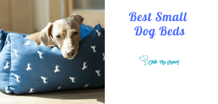 Best Small Dog Beds