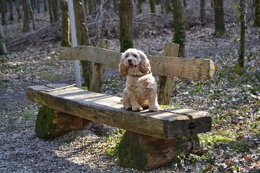 Best underground dog fences [Do They Really Work?]