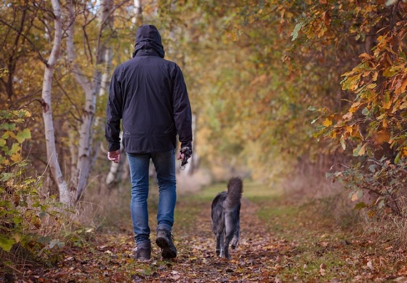 How to Train Your Dog to Walk on a Leash Without Tugging