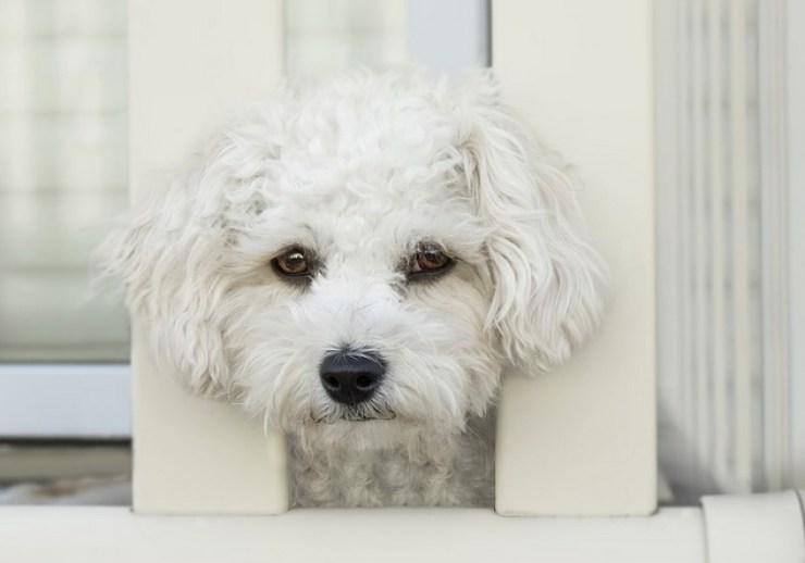 SportDog Brand In-Ground Wireless Dog Fence