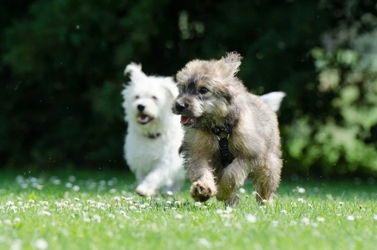 PetSafe Stay + Play vs PetSafe Free to Roam