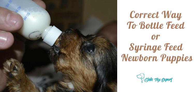 Correct Way To Bottle Feed or Syringe Feed Newborn Puppies