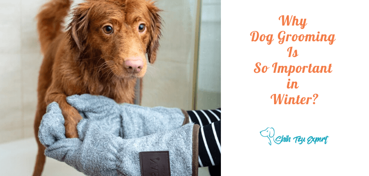 Why Dog Grooming Is So Important in Winter?