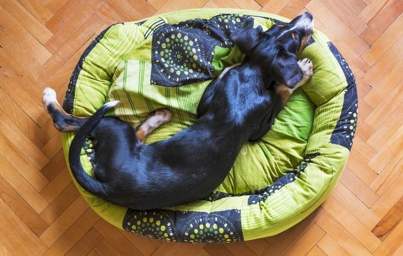 Igloo Dog House Reviews