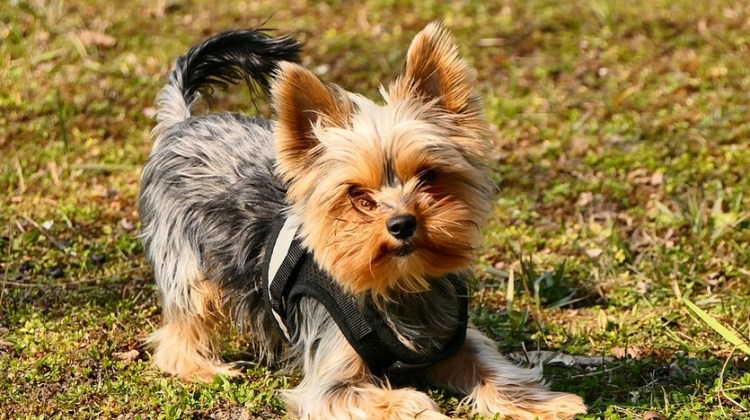 The Best Dog Training Collars