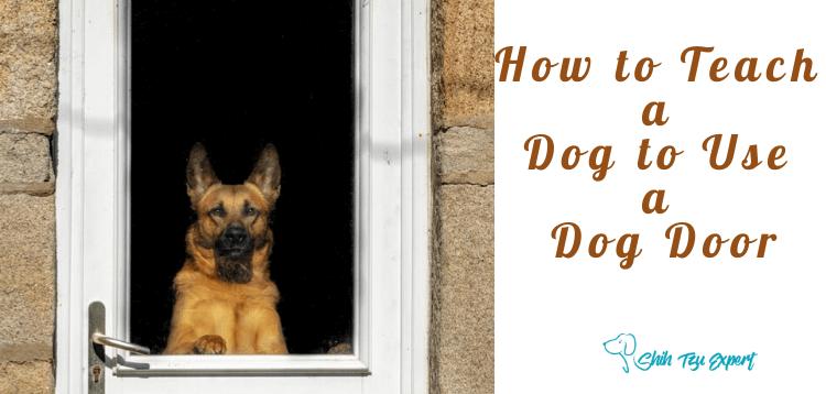 How to Teach a Dog to Use a Dog Door (1)