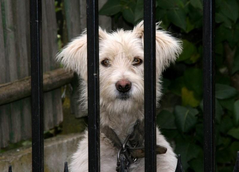 The Best Motorola Wireless Dog Fence