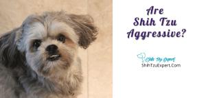 Are Shih Tzu Aggressive