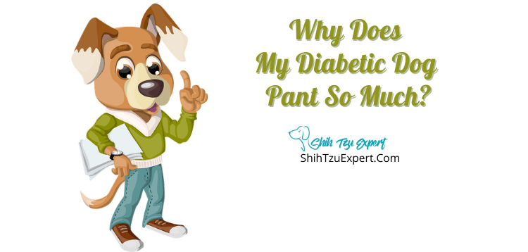 Why Does My Diabetic Dog Pant So Much?