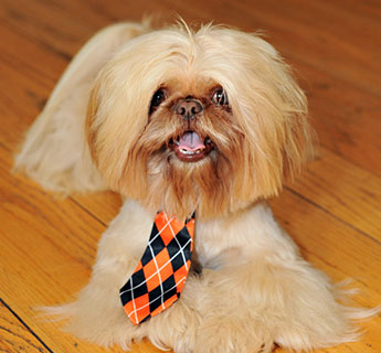 Shih Tzu Pals Dog Breeders About Our Program