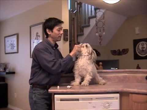 How To Brush Your Dog's Teeth And Train Dogs To Cooperate