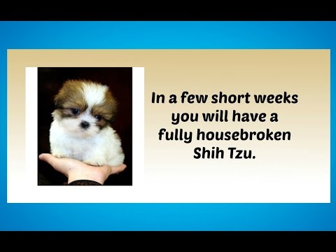 Potty Training Your Shih Tzu Puppy