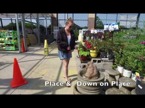 Shih Tzu Puppy Tuffy Incredible Transformation Video! Best Dog Training Hampton Roads Virginia