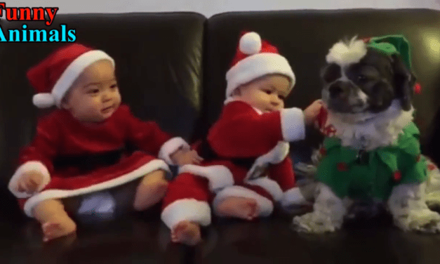 Shih Tzu Dog makes this Cute Baby very happy!