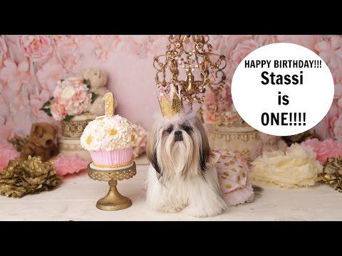 Stassi is One Shih Tzu birthday.