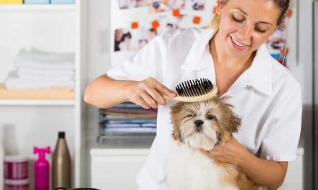 Shih Tzu Shampoo – Tips to Live By
