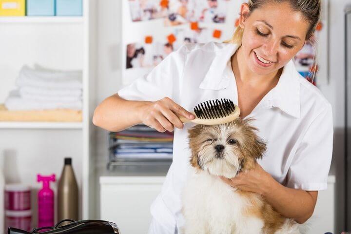 Shih Tzu Shampoo – Tips to Live By