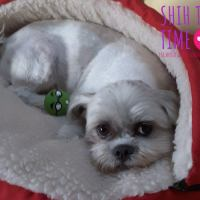 Shih Tzu Beds For Small Dogs