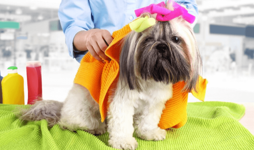 HOW OFTEN SHOULD I BATHE MY SHIH TZU?