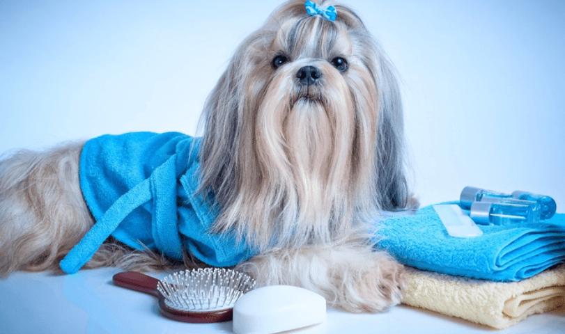 Best Shih Tzu Shampoo