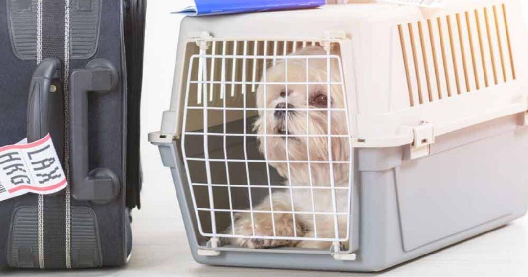 Best Dog Carrier For Your Shih Tzu