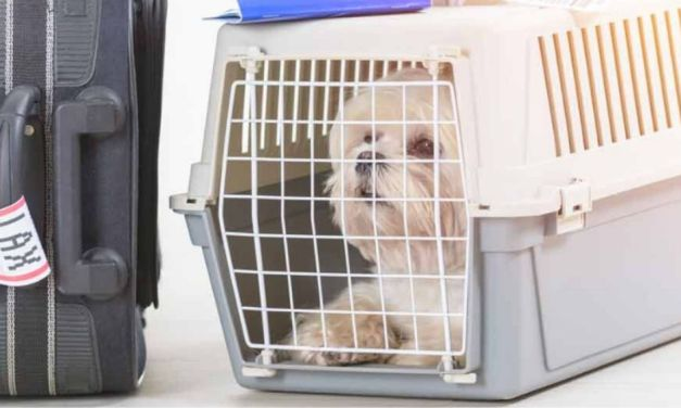 Best Dog Carrier For Your Shih Tzu