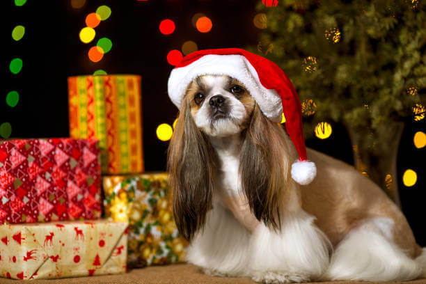 GIFT IDEAS FOR SHIH TZU OWNERS