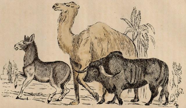 1860 – മൃഗചരിതം – കളർച്ചിത്രം