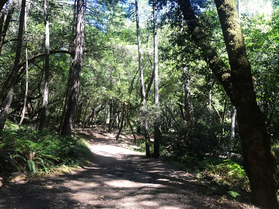 Hike Cataract Falls Trail || Shikha la mode