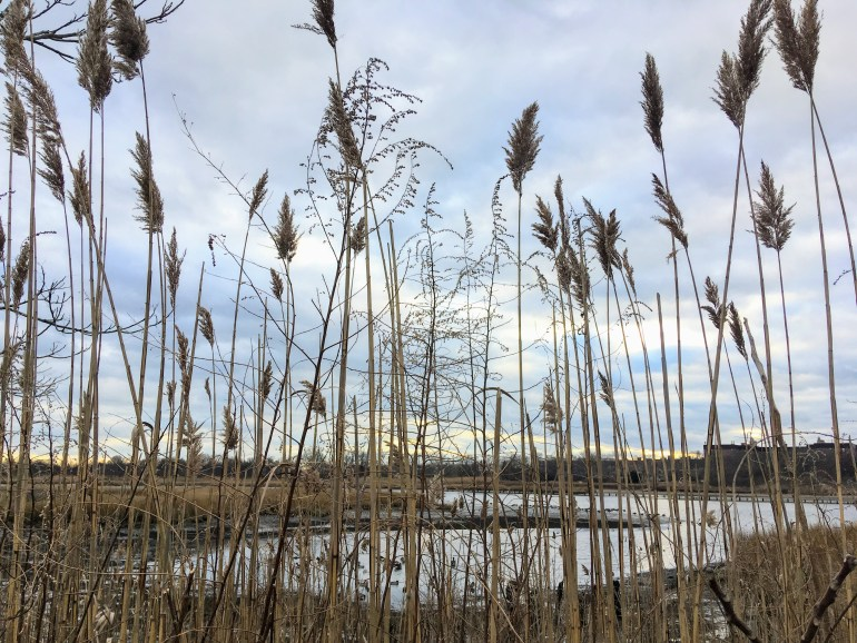Marine Park Salt Marsh Secluded Spot  NYC