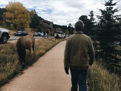 Elk Crossing ;)
